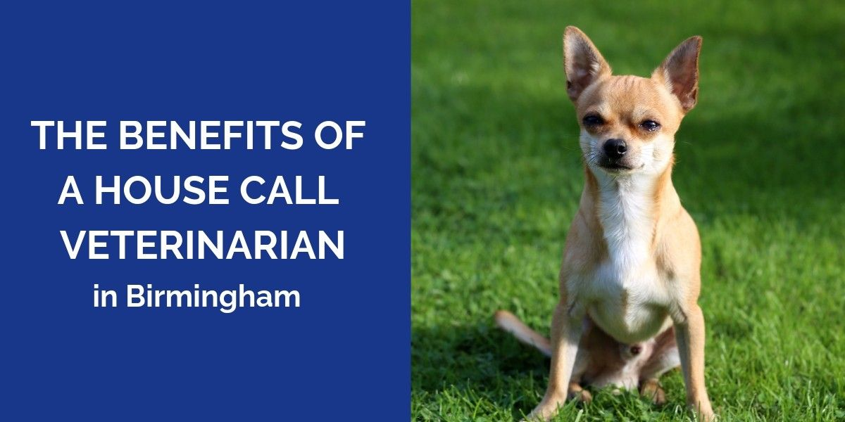 The_Benefits_Of_A_House_Call_Veterinarian