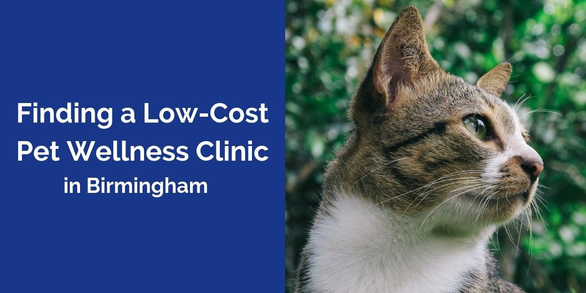 Finding_a_Low-Cost_Pet_Wellness_Clinic