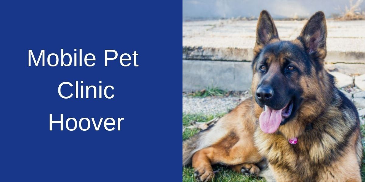Mobile_Pet_Clinic_Hoover