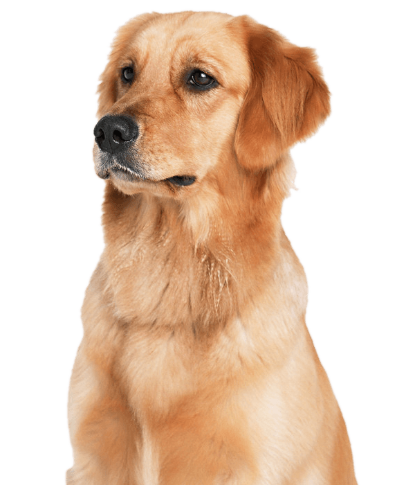 Comforts Of Home Vet Care House Call Veterinarian In Birmingham Hoover Gardendale